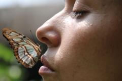 Papillon5-1030x557