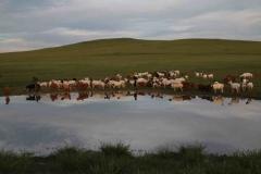 Chèvres-1030x685